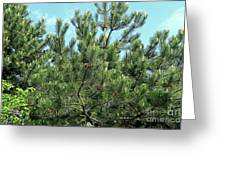 Woodland Pines Greeting Card