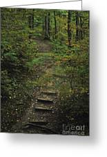 Woodland Steps Greeting Card