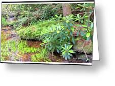 Woodland Stream Forest Interior Greeting Card
