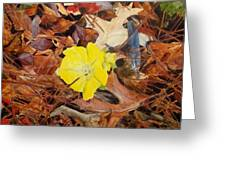 Woodland Surprise Greeting Card