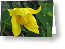 Woodland Tulip Greeting Card
