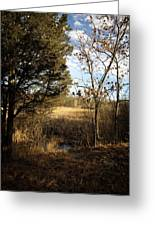 Woodland View  Greeting Card