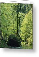 Woodland View With Stream, Sachsische Greeting Card
