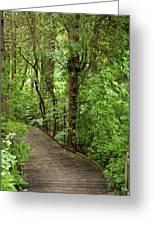 Woodland Walk Greeting Card