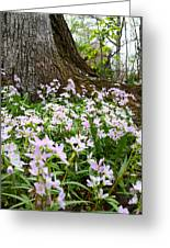 Woodlands Spring Beauty Greeting Card