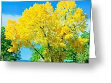 Woodmoor Greeting Card