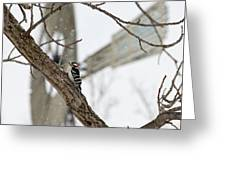 Woodpecker And Windmill Greeting Card