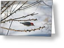 Woodpecker Diver Greeting Card