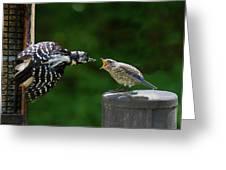 Woodpecker Feeding Bluebird Greeting Card