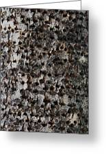 Woodpecker Holes In The Apple Tree Greeting Card