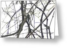 Woodpecker In The Forest Greeting Card