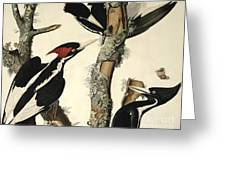 Woodpecker Greeting Card by John James Audubon