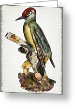 Woodpecker Red Heads Greeting Card