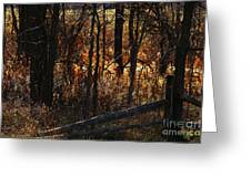 Woods - 1 Greeting Card