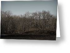 Woods Among The Trees Greeting Card