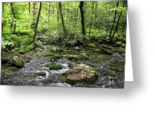 Woods - Creek Greeting Card