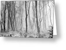 Woods In Mist, Stagshaw Common Greeting Card