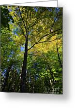 Woods In Nh Greeting Card
