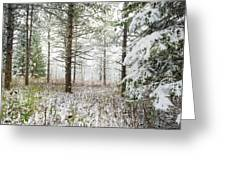 Woods In Winter At Retzer Nature Center  Greeting Card