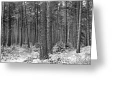 Woods In Winter, Slaley Greeting Card