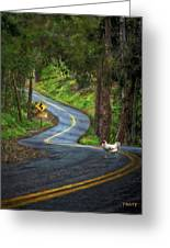 Woods Road 1 - Summer Greeting Card