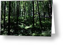 Woods Greeting Card