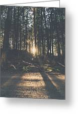 Woods Sunset Greeting Card