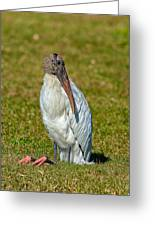 Woodstork On The Lookout Greeting Card