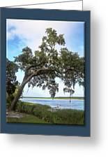 Woodstorks At Oak Grove Island Greeting Card