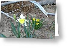 Woodsy Narcissus Greeting Card