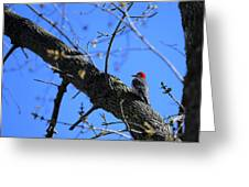 Woody Woodpecker Greeting Card