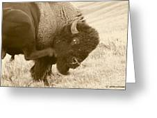Woolly Itch ... Montana Art Photo Greeting Card