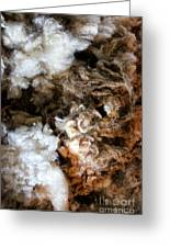 Woolshed Wool Greeting Card