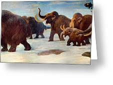 Wooly Mammoths Near The Somme River Greeting Card