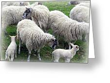Wooly Times Greeting Card