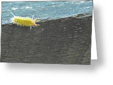Wooly Worm In Shiloh, Tn Greeting Card