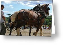 Work Horses At The Pull Greeting Card
