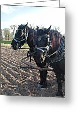 Working Percherons Greeting Card