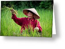 Working The Fields, Thailand Greeting Card