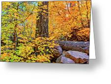 Workman Creek Maples Greeting Card
