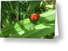 World Of Ladybug 1 Greeting Card
