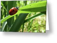 World Of Ladybug 2 Greeting Card