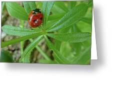 World Of Ladybug 3 Greeting Card