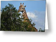 World's Tallest Mammal Greeting Card