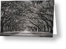 Wormsloe Plantation Greeting Card