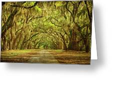 Wormsloe Plantation Oaks Greeting Card