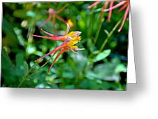Wp Floral Study 3 2014 Greeting Card