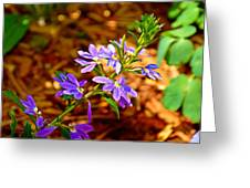 Wp Floral Study 4 2014 Greeting Card