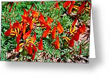 Wp Floral Study 6 2014 Greeting Card