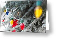 Wrap A Tree In Color Greeting Card